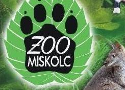 miskolc-zoo palyazat