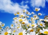tavasz pályázat