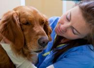 Állatorvosok a mindennapjainkban fotópályázat