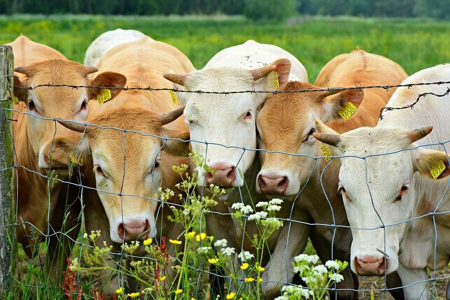 mezőgazdasági pályázatok