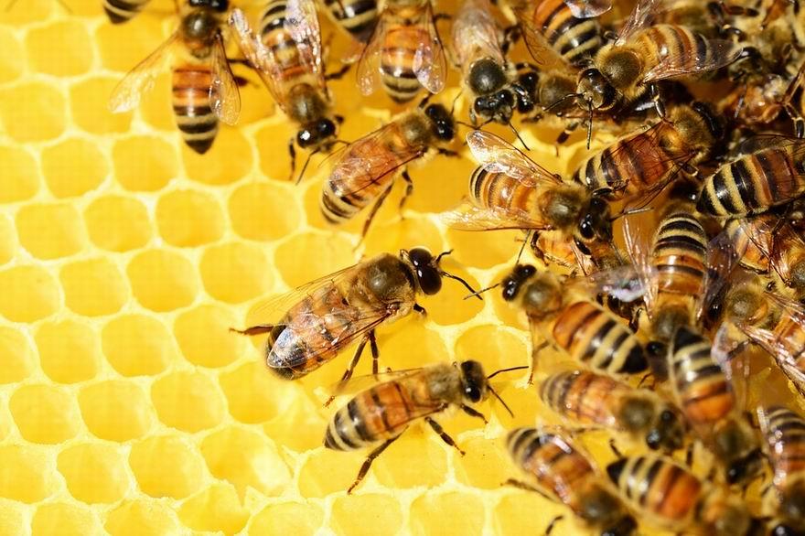 méhészeti pályázat